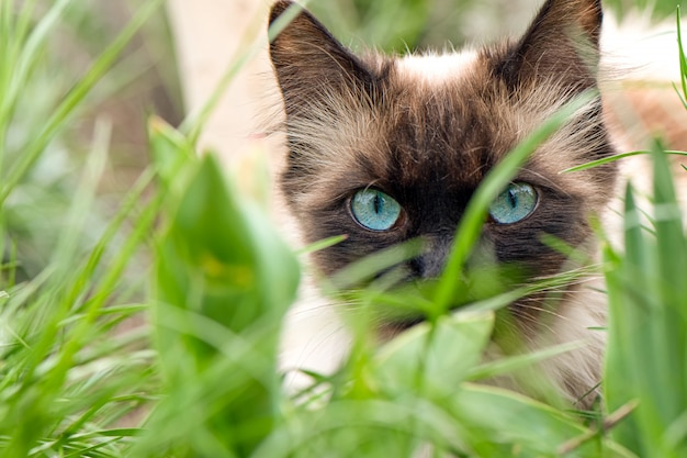 Chat mignon aux yeux bleus dans le jardin