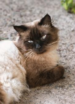 Chat mignon aux yeux bleus