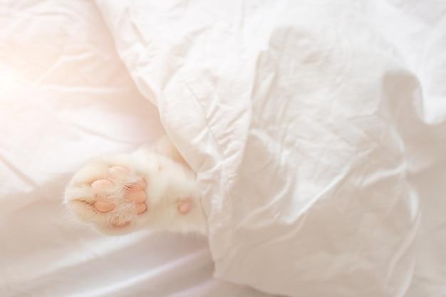 Chat mignon blanc dort dans un drap.