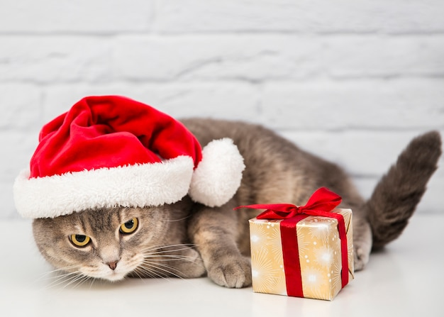 Chat mignon avec bonnet de noel et cadeau
