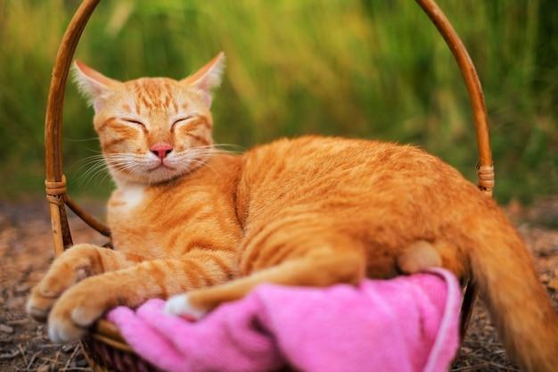 Chat mignon couché et ferme les yeux sur un tissu rose dans un panier en rotin près du champ d'herbe.