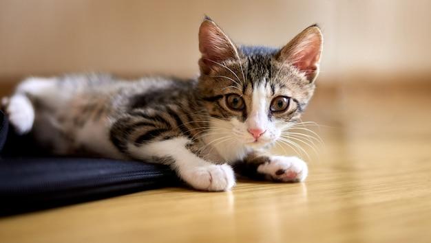 Chat mignon couché sur le sol et regardant vers la caméra