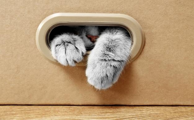 Chat mignon dans une boîte en carton