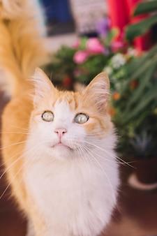 Chat mignon dans le jardin