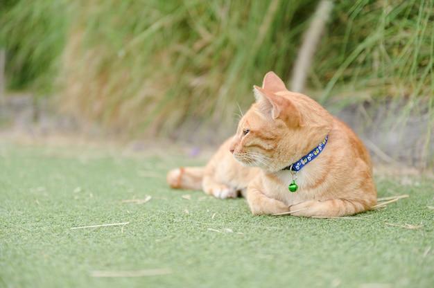 Chat mignon dormir sur le tapis vert