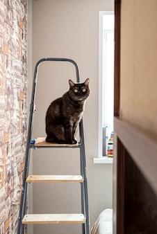 Chat mignon est assis sur le dessus de l'escabeau pendant le processus de rénovation domiciliaire