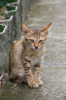 Un chat mignon est assis sur un trottoir.
