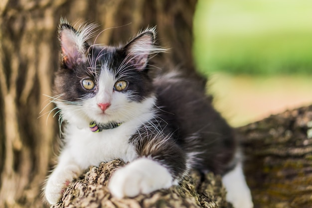 Chat mignon est couché sur l'arbre, petit chaton sur une branche