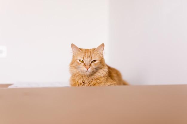 Chat mignon gingembre dans une boîte en carton sur le sol à la maison