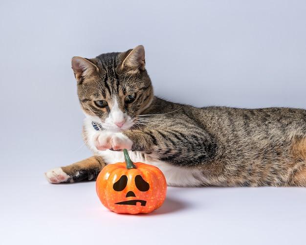 Chat mignon jouant avec une citrouille d'halloween