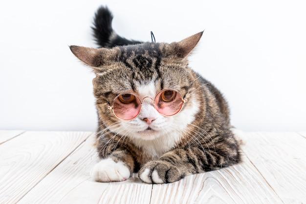 Chat mignon avec des lunettes