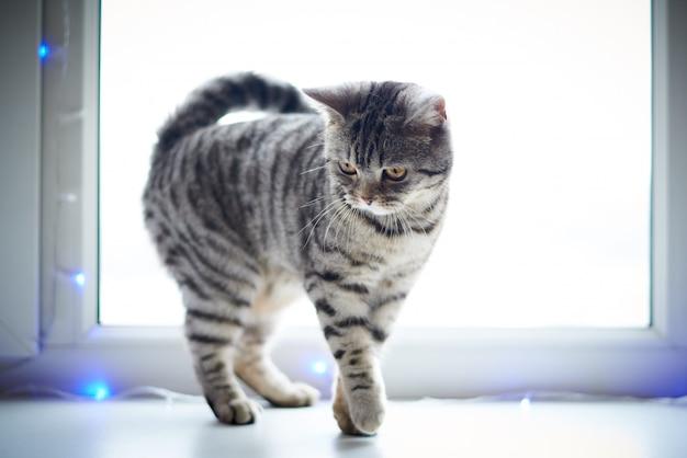 Chat mignon marche sur le rebord de la fenêtre.