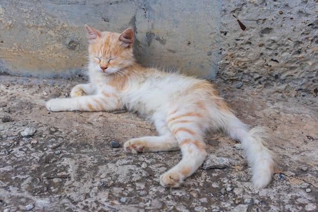 Chat mignon prenant un bain de soleil dans la rue