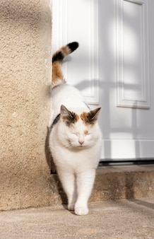 Chat mignon près de la porte à l'extérieur