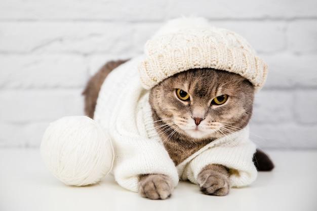 Chat mignon avec pull et bonnet