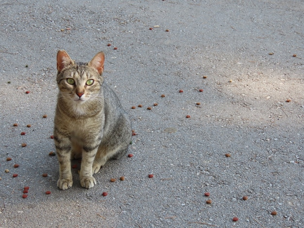 Chat mignon regardant droit