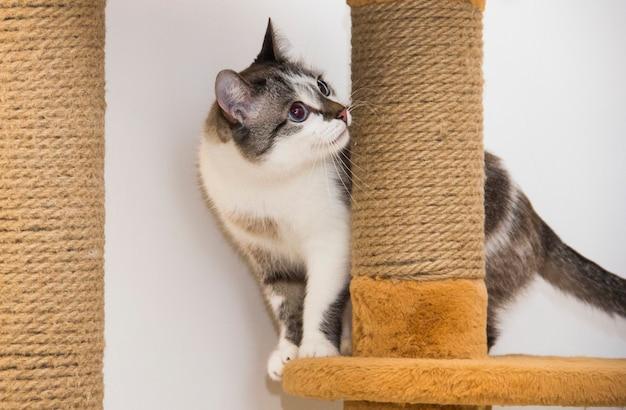 Un chat mignon se couche dans son nid à l'intérieur d'une boîte en carton avec un trou enveloppé dans une couverture