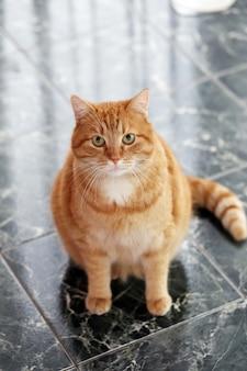 Chat mignon sur le sol
