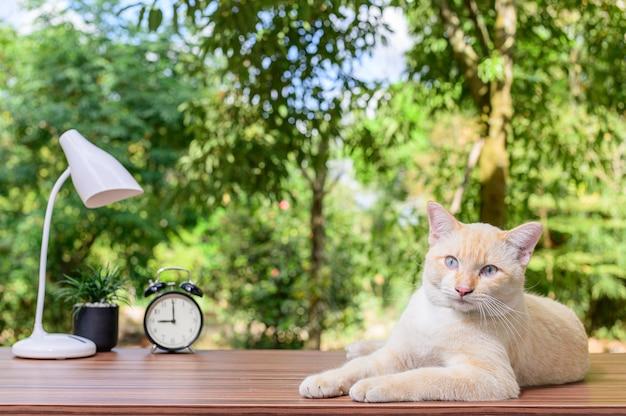 Chat mignon sur la table