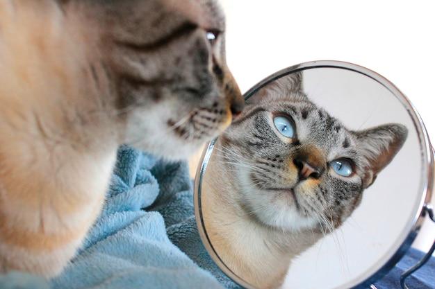 Chat avec miroir