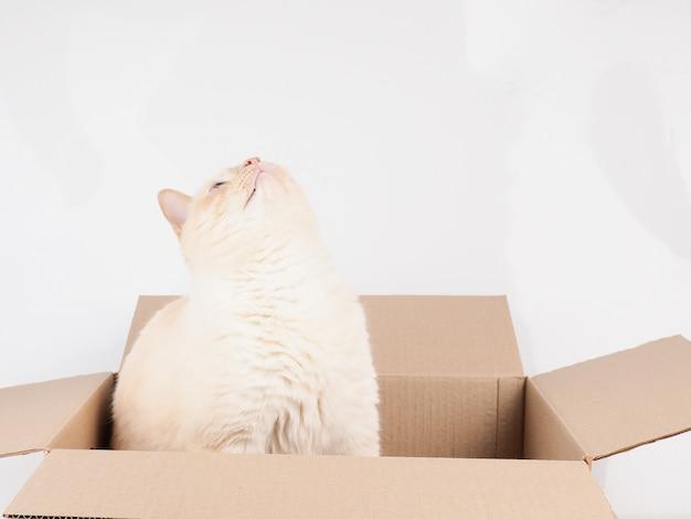 Chat moelleux assis dans une boîte en carton