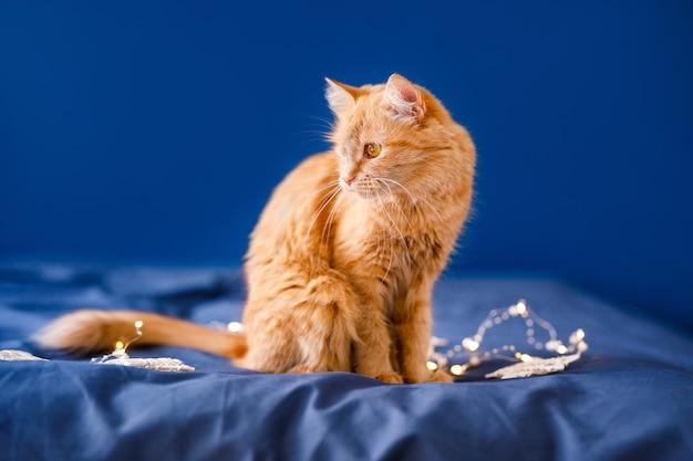 Un chat moelleux au gingembre est assis sur le lit et se lave sur un fond bleu avec une guirlande de noël.