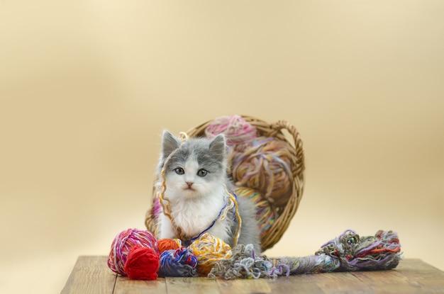 Chat moelleux mignon joue avec une balle de tricot.