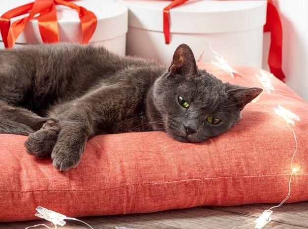Chat de noël avec un cadeau de noël