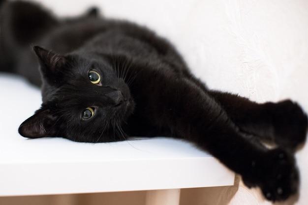 Chat noir allongé sur une table blanche