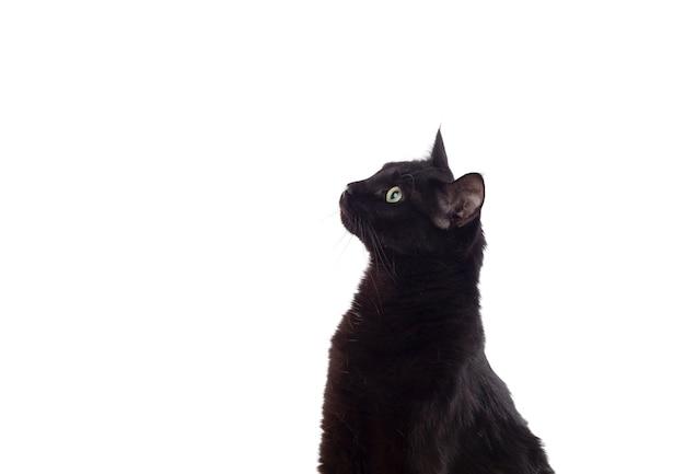 Chat noir aux yeux jaunes