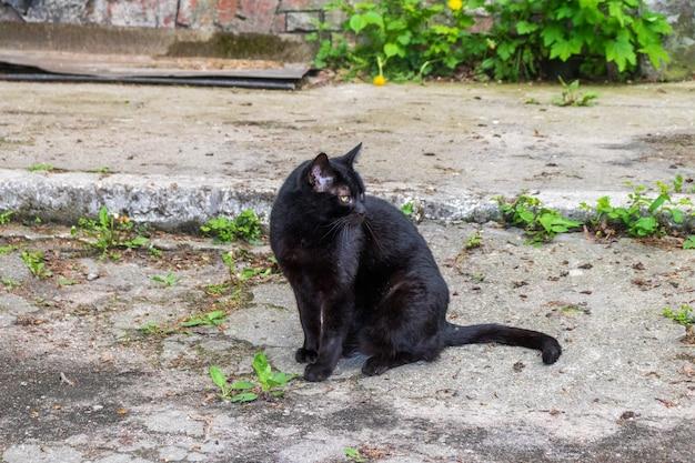Un chat noir aux yeux verts est assis dehors par une journée ensoleillée. regard sérieux et attentif d'un chat noir. le chat se réchauffe assis sur l'asphalte