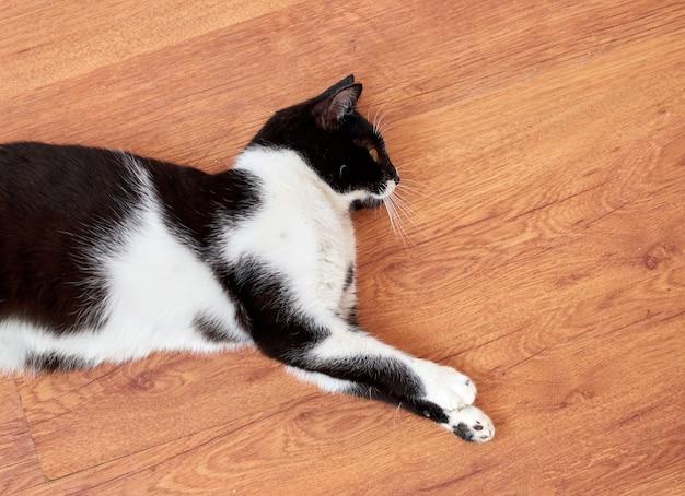 Un chat noir et blanc allongé sur un parquet