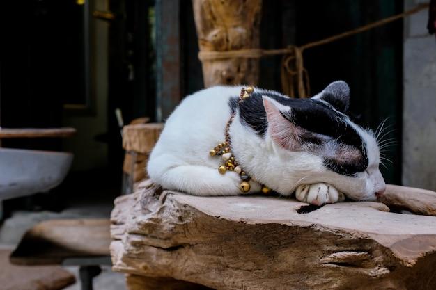 Chat noir et blanc dormant sur une bûche de bois