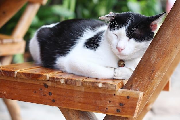 Chat noir et blanc dort sur la chaise en bois dans le jardin