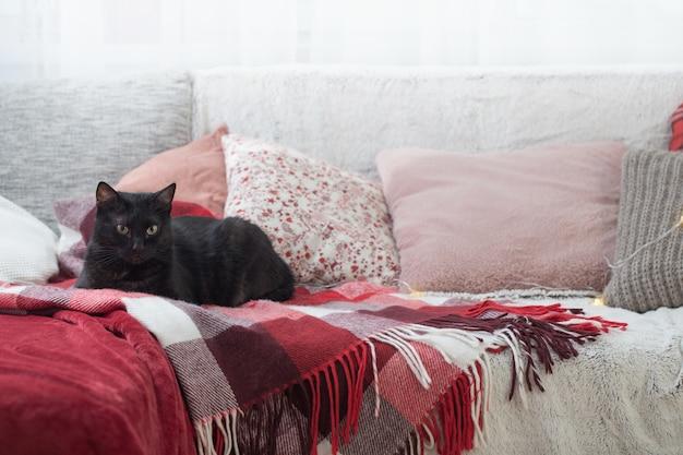 Chat noir sur canapé avec oreillers et plaids