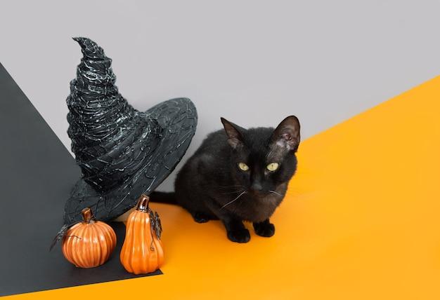 Chat noir avec chapeau de sorcière et citrouilles