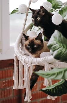 Chat noir et chat siamois dans une chaise en osier sur le balcon