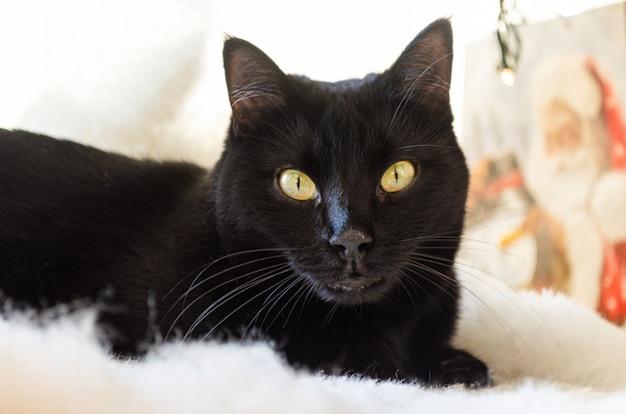 Chat noir couché sur un tapis blanc, avec cristmas présente en arrière-plan.
