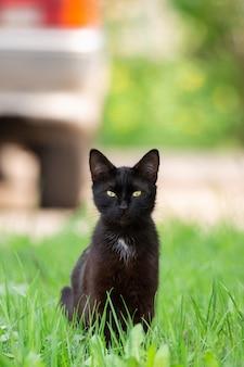 Chat noir dans l'herbe