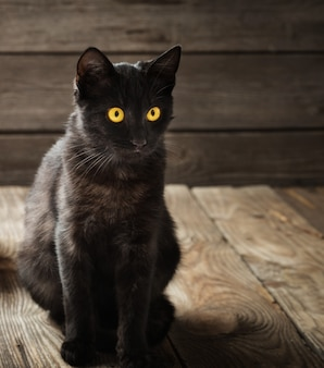 Chat noir sur fond de bois