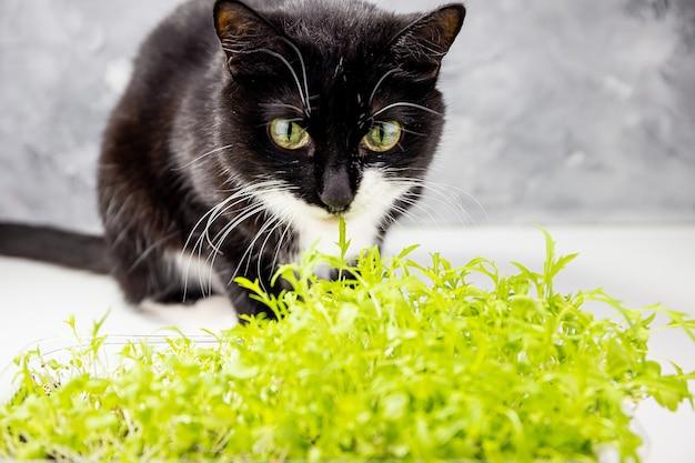 Chat noir mignon et petites plantes vertes