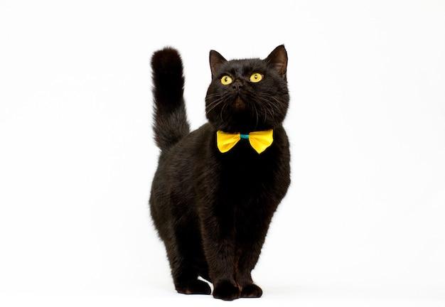 Chat noir portant un arc doré isolé