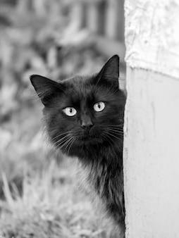 Le chat noir regarde du coin de la maison, photo verticale noire et blanche