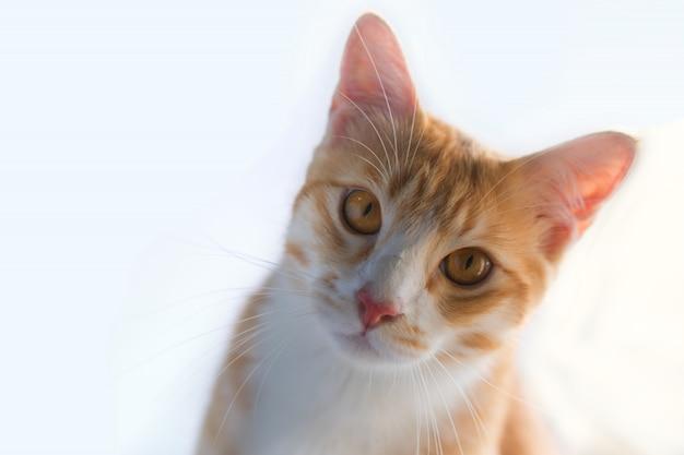 Le chat orange a cette allure.