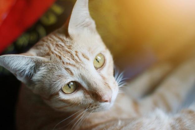 Chat orange assis sur la fenêtre avec sunligh