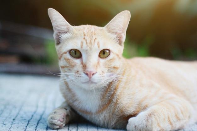 Chat orange assis sur le sol avec la lumière du soleil dans le jardin