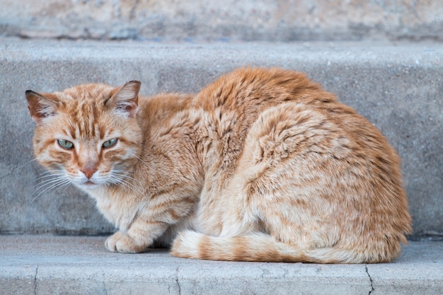 Chat orange dans la rue