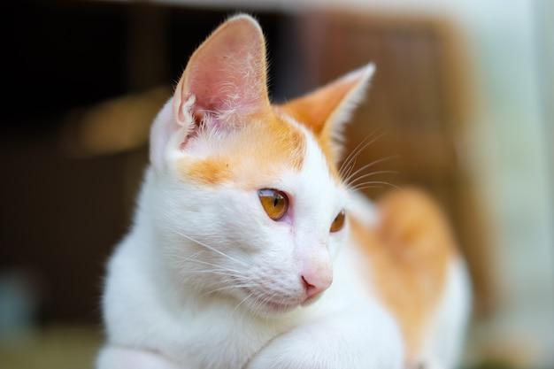 Chat orange mignon couché sur le sol en bois. il cherche des victimes. pour apporter de la nourriture.