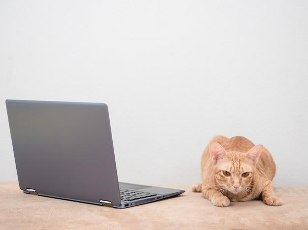 Chat avec ordinateur portable sur canapé sur fond blanc à la maison