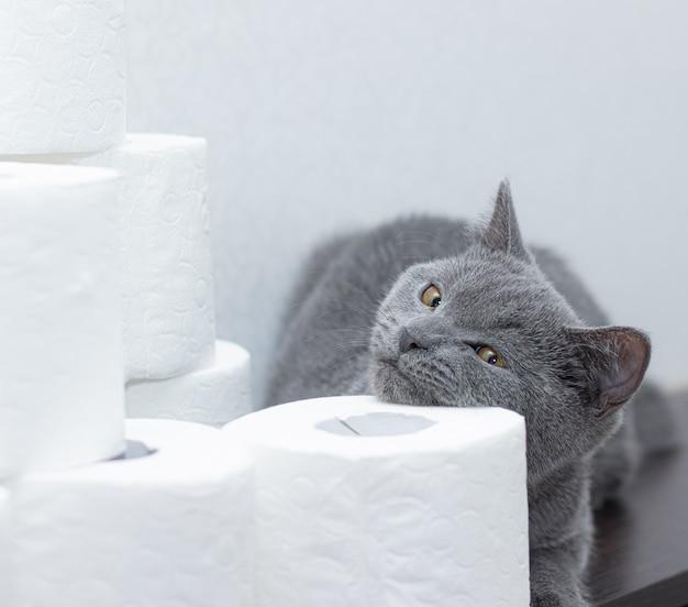 Chat et papier toilette. la panique générale sur le stock de papier. le manque de papier toilette.